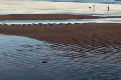 Två personer och en hundspring på den sandiga stranden på lågvatten på sunse Royaltyfria Foton