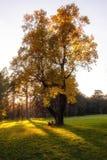 Två personer som sitter på gräsmattan under ett ensamt högt träd med yel royaltyfria foton