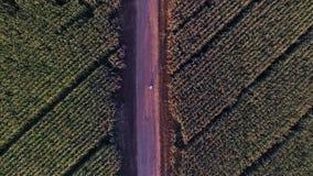 Två personer som står i mitt av ett vetefält, omfamningar för ett par bland fält lager videofilmer