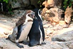 Två pingvin Arkivfoton