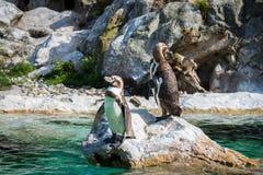 Två pingvin som står på en vagga royaltyfri fotografi