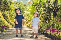 Två pojkar, en handelsresande i Vietnam mot bakgrunden av vietnamesiska hattar arkivbilder