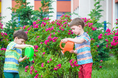Två pojkar för liten unge som bevattnar rosor med canen i trädgård Familj trädgård som arbeta i trädgården, livsstil Royaltyfria Foton