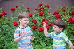 Två pojkar för liten unge som bevattnar rosor med canen i trädgård Familj trädgård som arbeta i trädgården, livsstil Arkivfoto