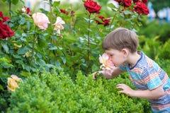 Två pojkar för liten unge som bevattnar rosor med canen i trädgård Familj trädgård som arbeta i trädgården, livsstil Arkivbild