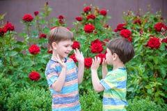 Två pojkar för liten unge som bevattnar rosor med canen i trädgård Familj trädgård som arbeta i trädgården, livsstil Royaltyfria Bilder
