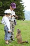 Två pojkar och marmot i Alps Arkivbilder