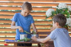 Två pojkar som arbeta i trädgården och att plantera växter i krukor i balkong, terrass i trädgård royaltyfri bild