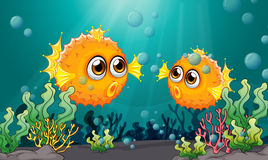 Två pufferfiskar under havet Arkivfoton