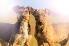 Två puppys med glade ögon i solljuset Arkivbild