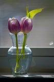 Två purpurfärgade tulpan i en liten vas på en fönsterbräda Royaltyfri Foto