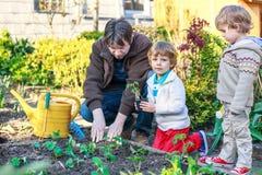 Två pyser och fader som planterar plantor i grönsaken garde Royaltyfri Foto