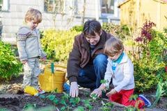 Två pyser och fader som planterar plantor i grönsaken garde Royaltyfria Foton