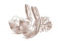 Två räkasvansar stock illustrationer