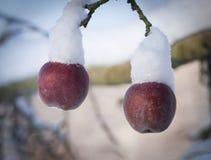 Två röda äpplen med snöhattar fotografering för bildbyråer