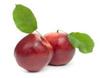 Två röda äpplen på vit bakgrund, närbild Royaltyfria Foton