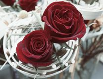 Två röda dekorerade rosor Arkivbilder