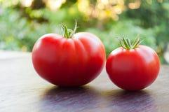 Två röda nya tomater Royaltyfri Bild
