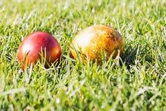 Två röda och påskägg på Sunny Grass Royaltyfri Foto