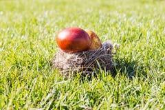 Två röda och påskägg på Sunny Grass i rede Arkivfoton