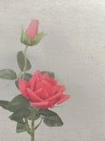 Två röda rosor på vit vägg 1 fotografering för bildbyråer