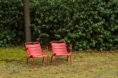 Två röda stolar bredvid de En träd och utmattat med sidor och naturen i bakgrunden royaltyfria bilder