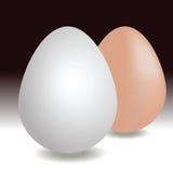 Två realistiska ägg för vektor Arkivfoto
