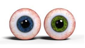 Två realistiska mänskliga ögonglober med blått- och gräsplanirins som isoleras på vit bakgrund 3d, framför Royaltyfri Foto