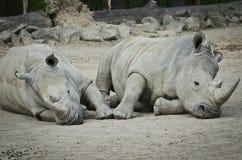 Två rhinos Royaltyfri Fotografi