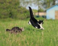 Två roliga gulliga katter är roliga och snabba att köra ett lopp till och med set Arkivbild