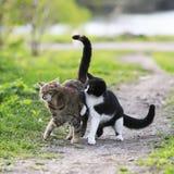 Två roliga gulliga katter som spelar på en grön äng i tidig vår Arkivfoto