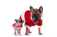 Två roliga hundkapplöpning i jultomtendräkt Royaltyfria Bilder