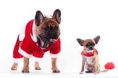 Två roliga hundkapplöpning i jultomtendräkt Arkivfoton