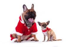 Två roliga hundkapplöpning i jultomtendräkt Royaltyfri Bild