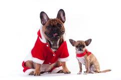 Två roliga hundkapplöpning i jultomtendräkt Fotografering för Bildbyråer