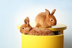 Två roliga kaniner på tabellen arkivfoto