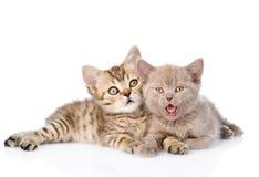 Två roliga kattungar som tillsammans ligger bakgrund isolerad white royaltyfri fotografi