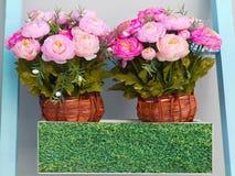 Två rosa blommor i krukor Arkivbilder