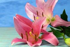Två rosa färger Tiger Lilies Arkivfoto