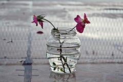 Två rosor i vasen Arkivfoton