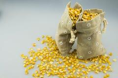 Två säckvävsäckar av guld- havre Royaltyfri Bild