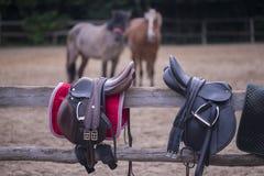 Två sadlar och två hästar Arkivfoto