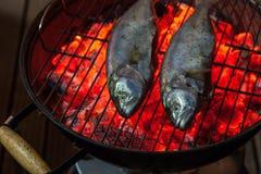 Två saltwated fiskar som stekas på varmt kol, grillar på natten Royaltyfria Bilder