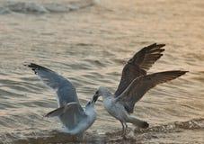 Två seagulls Royaltyfri Fotografi