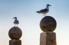 Två seagulls Fotografering för Bildbyråer