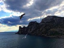 Två seagulls Royaltyfri Bild