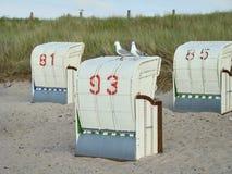 Två seagulls på strandstolar arkivbilder