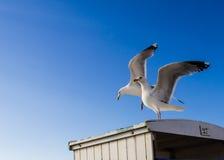 Två seagulls på taket av strandkabiner Arkivfoton