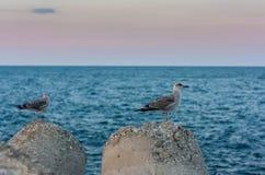Två seagulls på a vaggar Arkivfoton