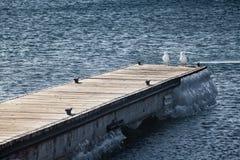 Två seagulls som vilar på pir royaltyfri bild